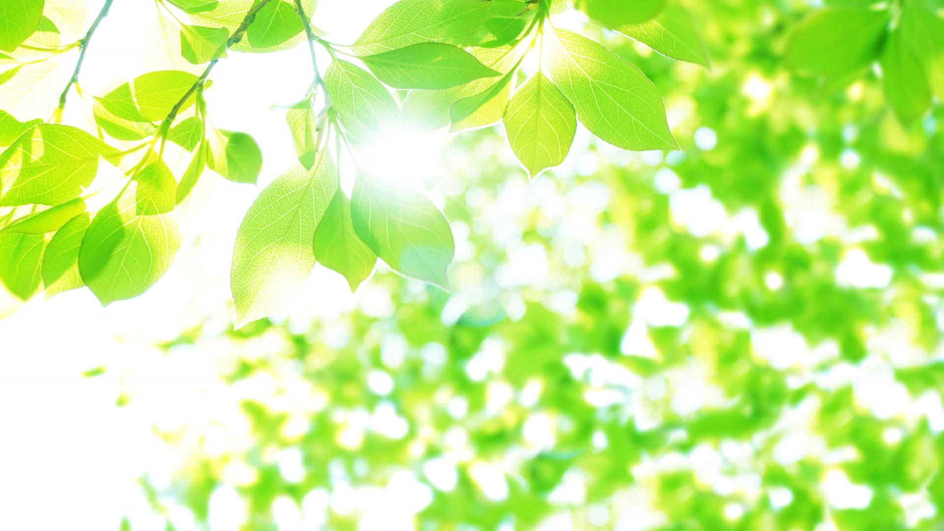 4月も樹木葬 現地説明会を行います!